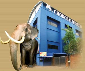 Chokchai